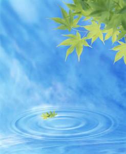 leaf falling on water